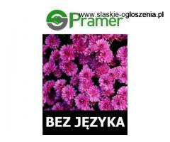 Pracownik przy kwiatach szklarniowych (lokalizacja do wyboru)